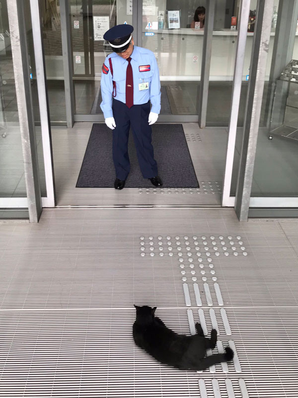 museum cats japan 5 Two Cats Have Been Trolling Museum Security for Over 2 Years Now
