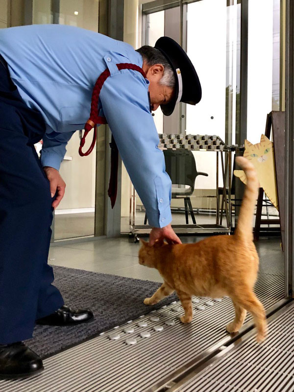 museum cats japan 9 Two Cats Have Been Trolling Museum Security for Over 2 Years Now