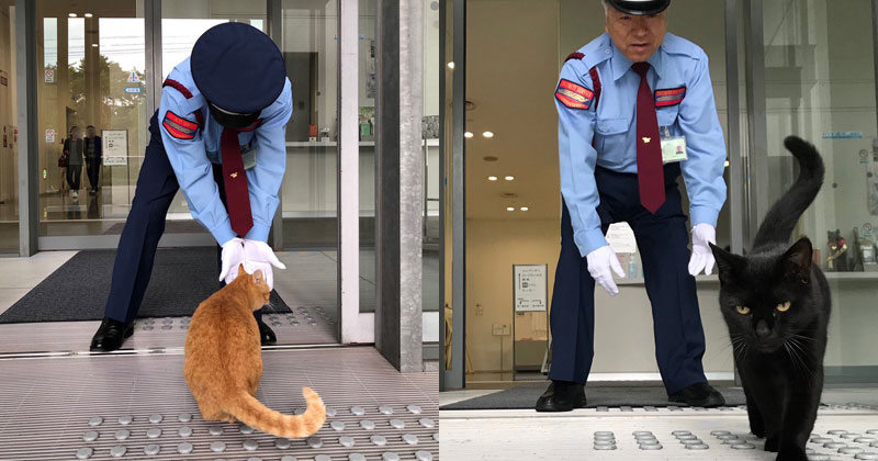 Two Cats Have Been Trolling Museum Security for Over 2 YearsNow