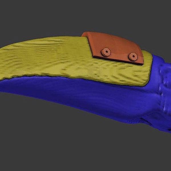 veterinario 3d stampa nuovo becco per il tucano ferito 5 veterinario 3D stampa nuovo becco per il tucano ferito