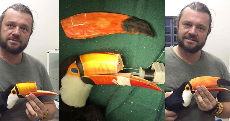 Vet 3D Prints New Beak for Injured Toucan