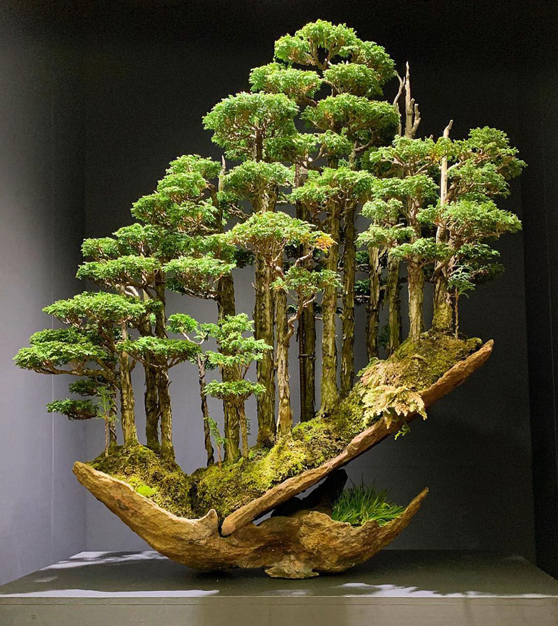 bonsai hinoki forest by masahiko kimura 1 This Bonsai Forest by Masahiko Kimura is Incredible