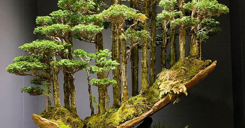 This Bonsai Forest by Masahiko Kimura is Incredible