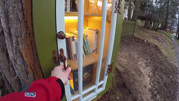 book tree library in old trunk sharalee armitage 6 Woman Forced to Remove Dying Tree, Turns It Into Tiny Library Instead