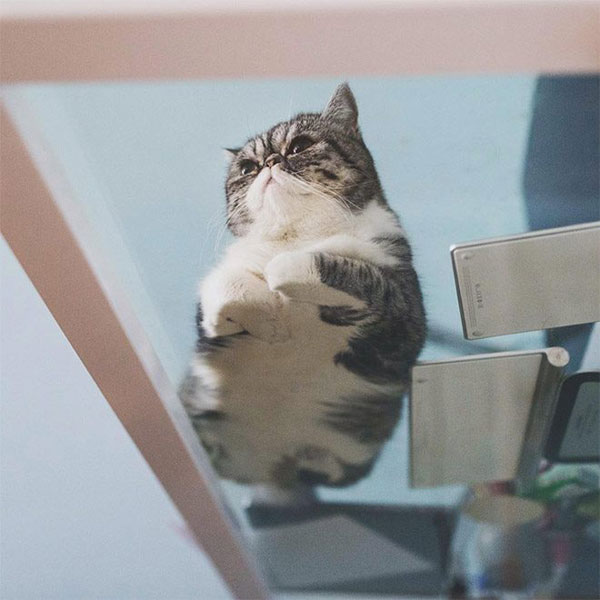 cats sitting on glass tables 1 21 Photos of Cats Sitting on Glass Tables, Please Disregard
