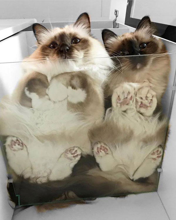 cats sitting on glass tables 4 21 Photos of Cats Sitting on Glass Tables, Please Disregard
