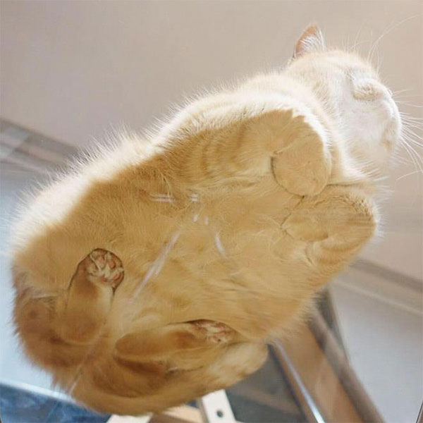 cats sitting on glass tables 7 21 Photos of Cats Sitting on Glass Tables, Please Disregard