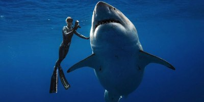 Ocean Ramsey Goes Freediving With World's Largest Known Great White