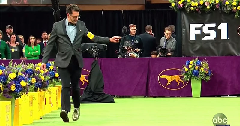 The 2019 Westminster Dog Show, Except There's No Dogs