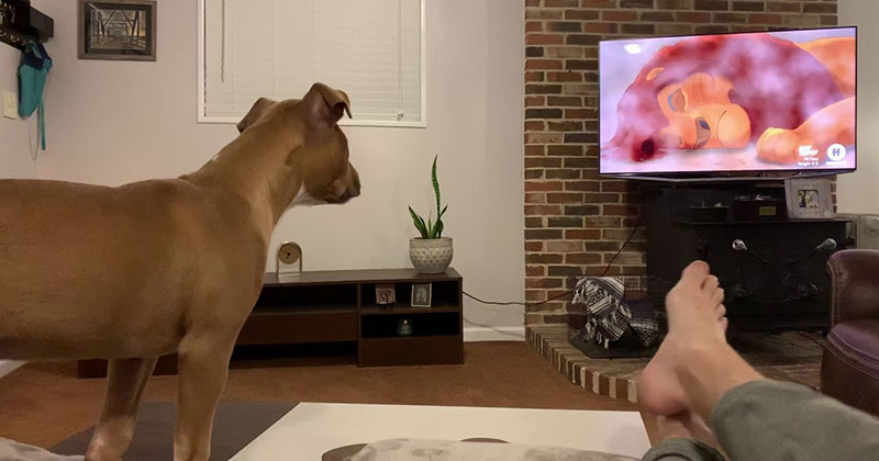 This Dog Reacting to 'That Scene' from the Lion King is Giving Me All the Feels