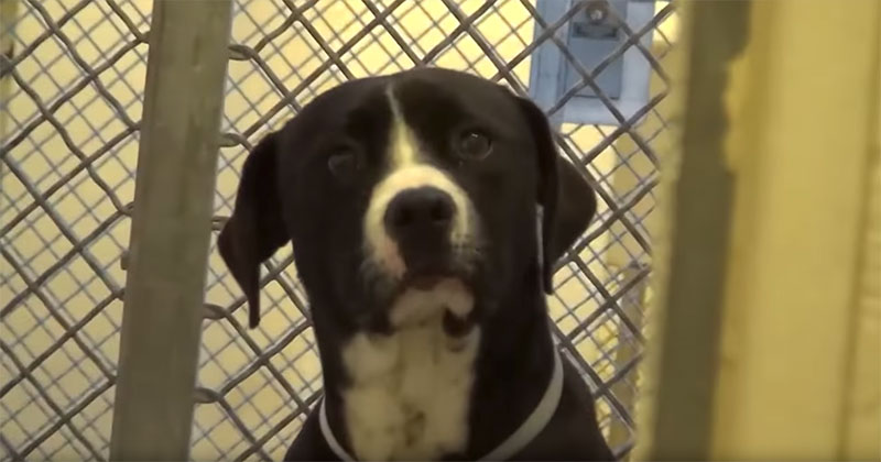 The Heartwarming Moment This Pupper Found Out He Was Getting Adopted