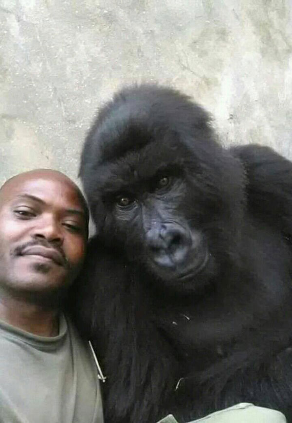 gorilla selfie standing 2 Its Only April and We Already Have the Best Selfie of the Year