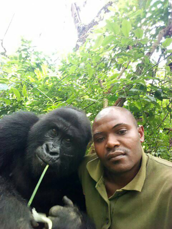 gorilla selfie standing 5 Its Only April and We Already Have the Best Selfie of the Year