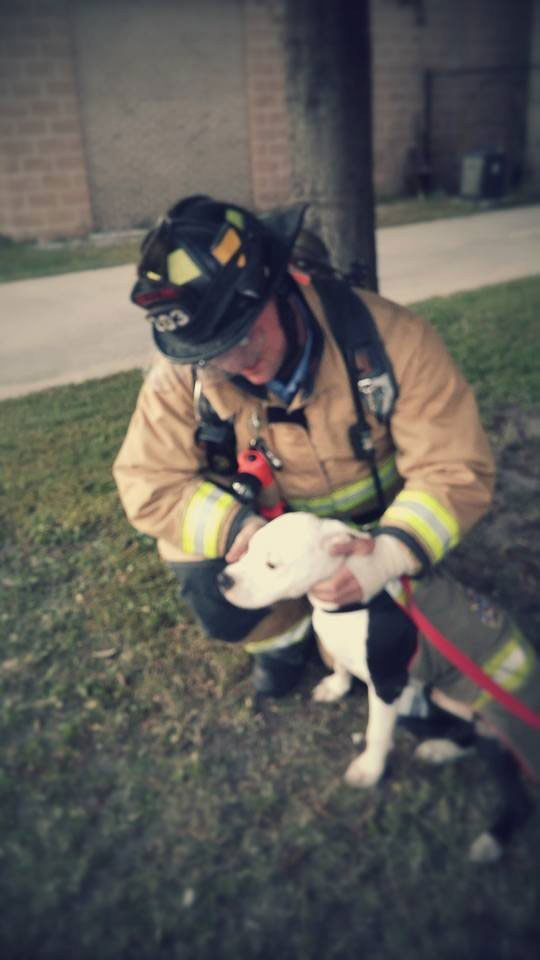 jake the puppy saved from a fire that went on to become a firefighter 15 Jake, the Puppy Saved From a Fire, that Went On To Become a Firefighter