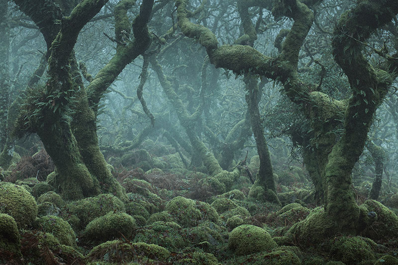 There's a Real-Life Enchanted Forest and It's In Dartmoor, England ...