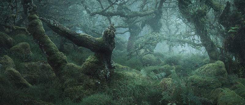 mystical by nei burnell 4 Theres a Real Life Enchanted Forest and Its In Dartmoor, England