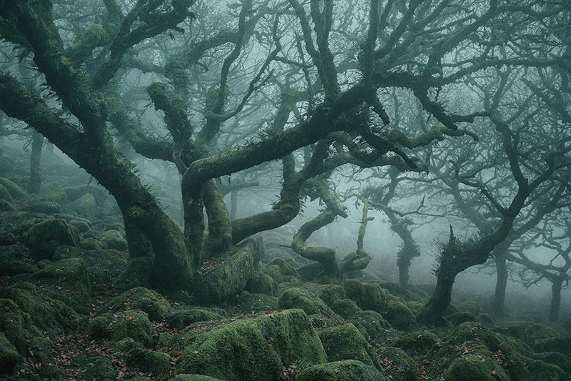mystical by nei burnell 5 Theres a Real Life Enchanted Forest and Its In Dartmoor, England