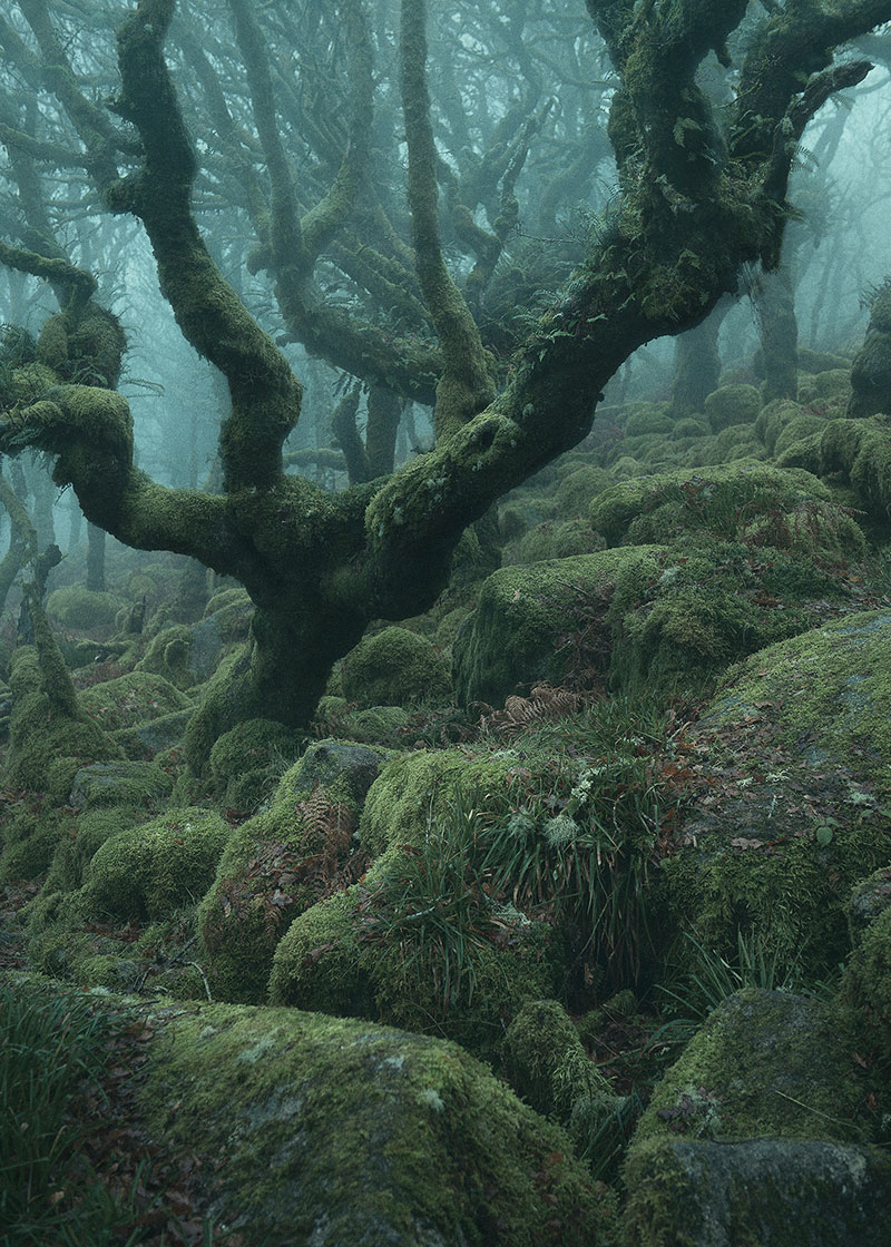 mystical by nei burnell 6 Theres a Real Life Enchanted Forest and Its In Dartmoor, England
