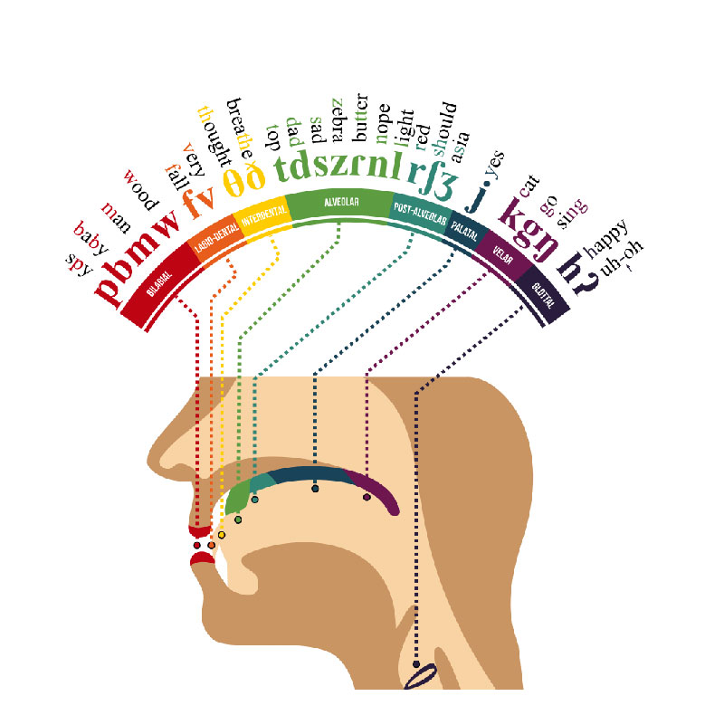 phonetic map of the human mouth english A Phonetic Map (English) of the Human Mouth