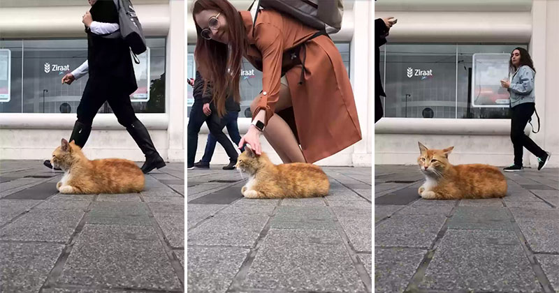 Timelapse of a Street Cat Chilling on a Sidewalk in Istanbul
