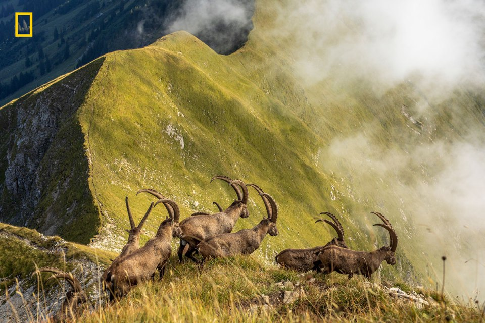 honorable mention nature The Amazing Winners of the 2019 National Geographic Travel Photo Contest