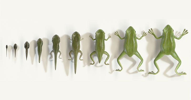 This Seamless Animation of a Tadpole to Frog Metamorphosis isFantastic