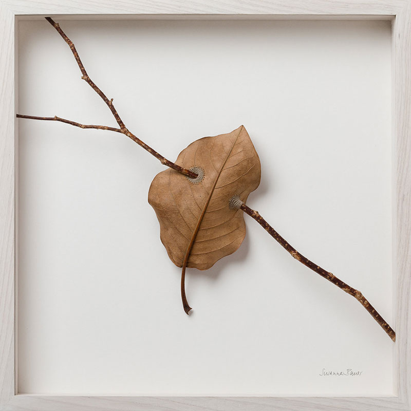 crochet leaves by susanna bauer 15 Artist Crochets New Life Into Fallen Leaves