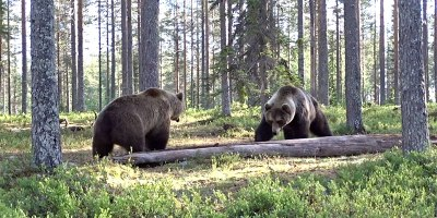 Insane Bear Fight Caught onVideo