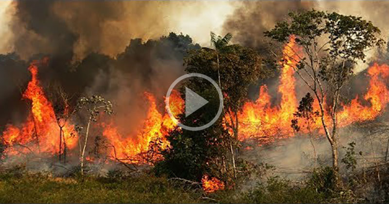 A Chilling Compilation of the Fires Currently Raging Across theAmazon