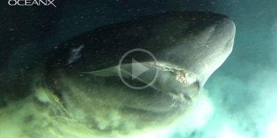Face to Face with an Ancient Deep Sea Shark That Pre-Dates MostDinosaurs