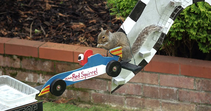 The Furmula 1 Squirrel Grand Prix, Because Internet