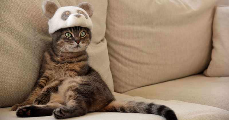 These Artists Turn Their Cats' Shedded Fur Into Tiny Cat Hats