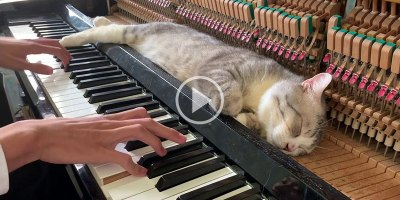 When Piano Cat Demands a Lullaby You Play aLullaby