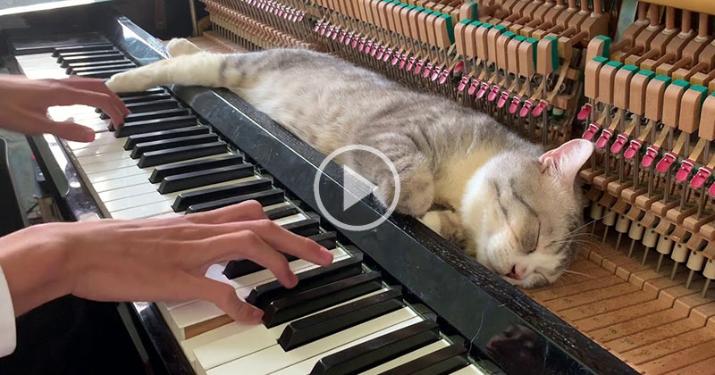 When Piano Cat Demands a Lullaby You Play a Lullaby