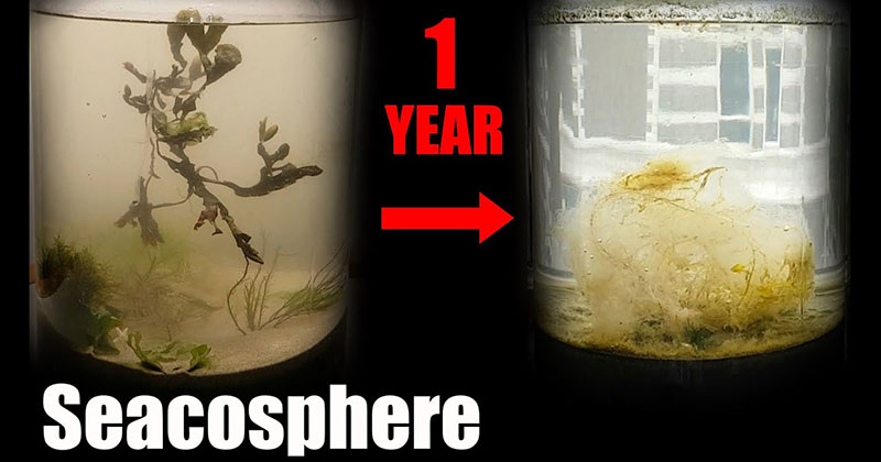 Guy Fills Jar with Seawater, Seals it For a Year, and Documents the Results
