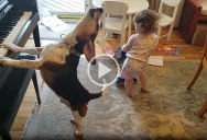 This Baby Dancing to a Piano Playing Dog Will Save Us All