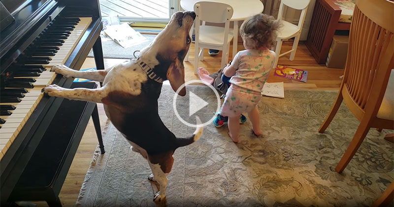 This Baby Dancing to a Piano Playing Dog Will Save UsAll