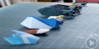 Origami Cicada: 11 Levels of Complexity from Easiest to Most Difficult