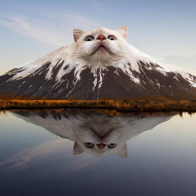 guy photoshops animals into random things 5 This Guy Cant Stop Photoshopping Animals Into the Most Random Things
