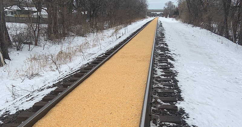 corn train railroad spill 3 A Train Carrying Corn Spilled All Over the Track and Made a Golden Road