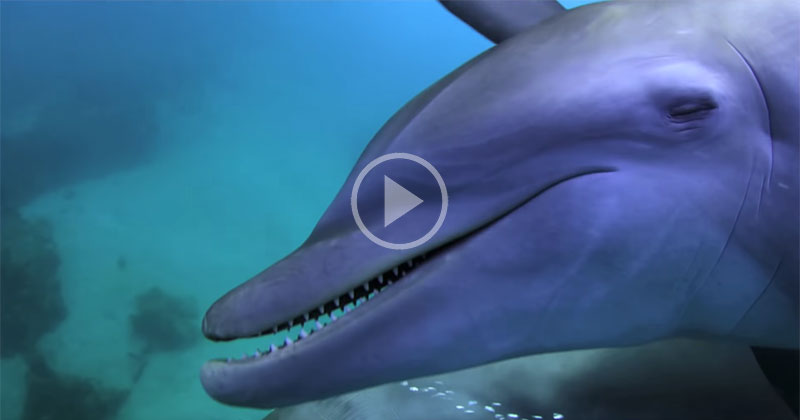 Puffer, Puffer, Pass: Dolphins Observed Getting High Off Pufferfish Toxins