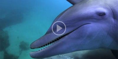 Puffer, Puffer, Pass: Dolphins Observed Getting High Off PufferfishToxins