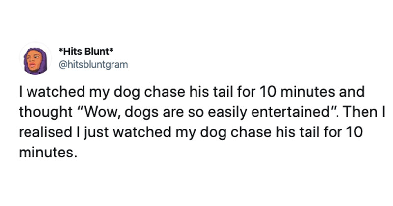 i watched my dog chase its tail tweet twitter The Shirk Report – Volume 560