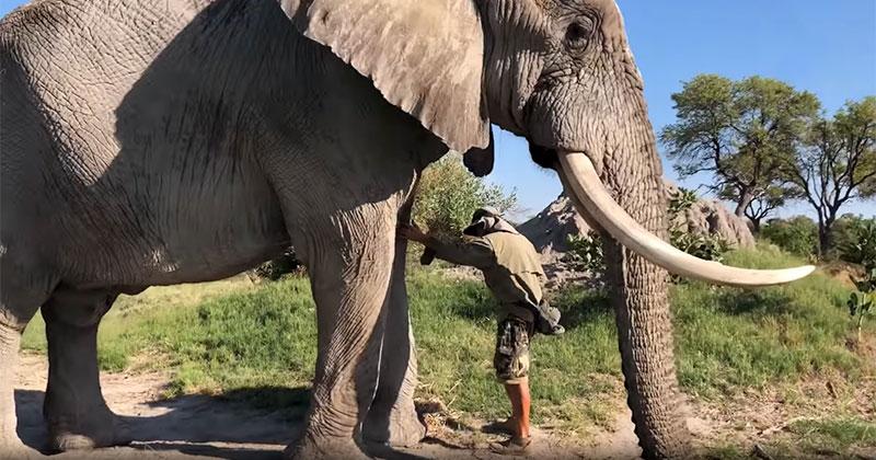 Gentle Giant Lays Down to Let Human Friend Treat His InjuredEye