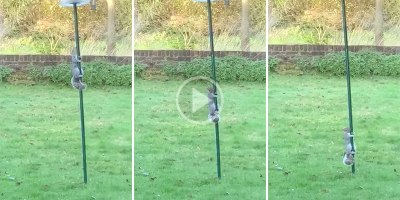 Squirrel Has Existential Crisis As It Hopelessly Slides Down Greased Feeder