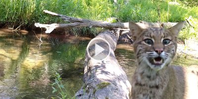 The Variety of Animals that Crossed this Log in a Year is JustIncredible
