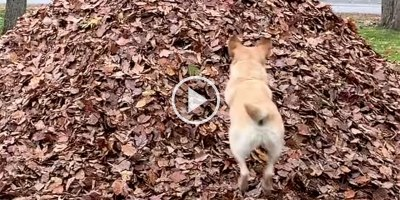 We Interrupt this Program to Bring You 3 Minutes of Stella's Best Leaf Jumps Ever