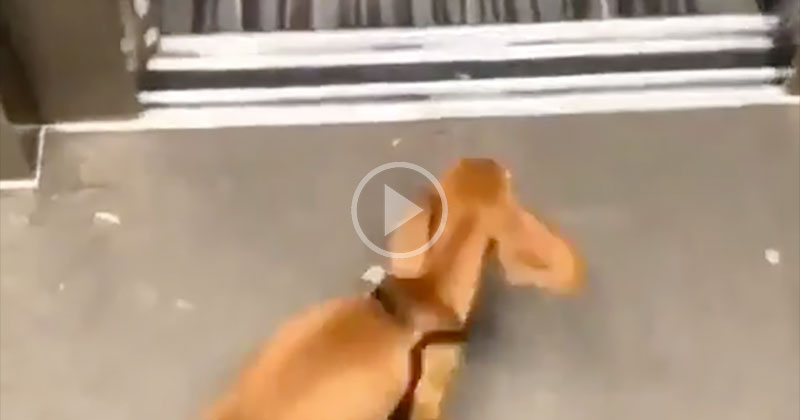 This Dog Racing Home to Get Into Bed is My Spirit Animal
