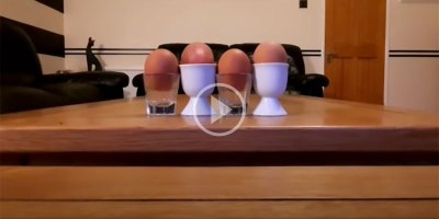 This Egg Cups Video Set to 'I Want To Break Free' by Queen is Perfection