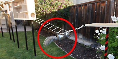The Most Over-Engineered Backyard Squirrel Obstacle Course You Will Ever See